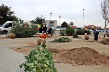 Plantació arbres